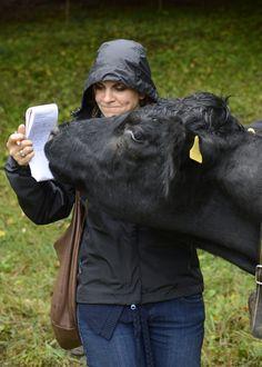 Dans la série: les vaches sont vraiment curieuses en voici une qui surveille de près les notes prises par Flavienne Wahli Di Matteo. Photo: Chantal Dervey
