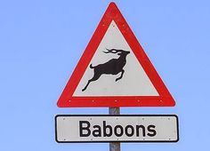 Funny Africa deer baboons sign fail picture