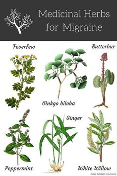 Here are some herbal remedies for natural migraine headache treatment and relief. …More Here are some herbal remedies for natural migraine headache treatment and relief. Natural Headache Remedies, Natural Home Remedies, Natural Headache Relief, Healing Herbs, Medicinal Plants, Holistic Remedies, Herbal Remedies, Cold Remedies, Health Remedies