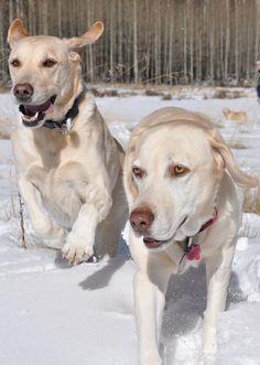 Rio (left) and Susie (right) in Colorado snow.