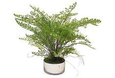 "18"" Maidenhair Fern in Bowl on OneKingsLane.com"