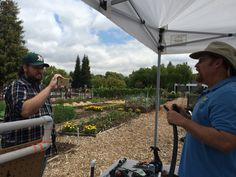 May 21 -- Filming a Google Hangout in Our Garden with Steve Griffin and Danny Willis manning the camera.
