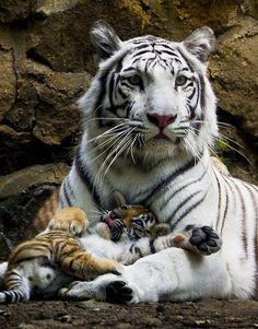 Veja fotos de filhotes fofos do mundo animal                              …