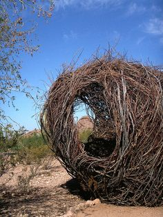 """Environmental sculpture at the Desert Botanical Gardens in Phoenix, Arizona. This was created by artist Patrick Dougherty back in March, I think. It is a """"temporary"""" installation created by this artist and still so very beautiful.     Beautiful green home"""