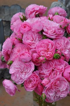 Captivating Why Rose Gardening Is So Addictive Ideas. Stupefying Why Rose Gardening Is So Addictive Ideas. Amazing Flowers, Beautiful Roses, My Flower, Fresh Flowers, Beautiful Flowers, Peony Flower, Pink Roses, Pink Flowers, Flowers Nature