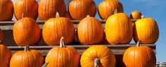 Anyone else have a pumpkin leftover from Halloween? Veggie Recipes, Vegetarian Recipes, Veggie Food, Fall Halloween, Halloween Crafts, All Souls Day, Vegan Restaurants, A Pumpkin, Autumn Theme