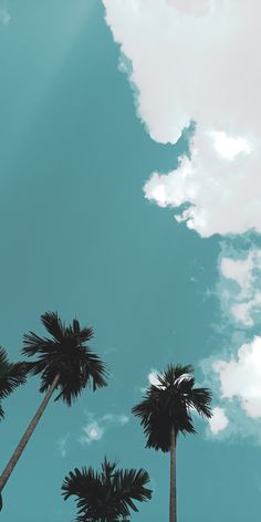 green trees under blue sky photo – Free Plant Image on Unsplash