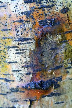 If I ever decide to take a photo class where I have to assign myself a project topic, I think I'll start off with bark. I find the colors and textures fascinating. Natural Forms, Natural Texture, Natural Colors, Patterns In Nature, Textures Patterns, Art Texture, Tree Bark, Art Abstrait, Beautiful Textures