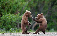 動物のおもしろ画像集 : 笑える おもしろ動物写真 - NAVER まとめ