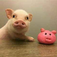 I Crown you: Prettiest Piggy This Side of The Mississippi!!!