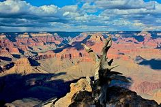 This tree is at the edge of a windswept side of the canyon Grand Canyon, Nature, Pictures, Photography, Travel, Photos, Naturaleza, Photograph, Viajes