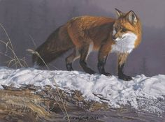Original paintings by Daniel Smith, Montana Wildlife Artist and African Animal Painter. Original paintings are available primarily through select galleries and museum exhibits. Wildlife Paintings, Wildlife Art, Animal Paintings, Daniel Smith Art, Animal Painter, Dragonfly Art, Fox Art, African Animals, Mountain Man