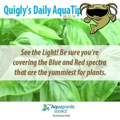 the red and blue light spectra are what plants need so make sure you
