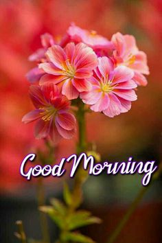Good Morning Beautiful Pictures, Good Morning Images Flowers, Good Morning Happy Saturday, Good Morning Love Messages, Good Morning Beautiful Images, Happy Sunday Quotes, Latest Good Morning, Good Morning Images Hd, Good Morning Picture