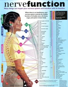 Nerve Function Chart : ' Many things can impair your nervous system and interfere with its function. When there is no interference, your nervous system controls the healthy function of virtually every cell, tissue, organ, and system of your body. Fitness Hacks, Fitness Workouts, Chronic Fatigue, Chronic Pain, Chronic Illness, Chiropractic Care, Chiropractic Center, Chiropractic Benefits, Nerve Pain
