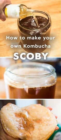 How to Make Your Own Kombucha Culture – SCOBY How to Make Your Own Kombucha Culture – SCOBY. Start making kombucha from scratch – even if you can't find a scoby. Make Your Own Kombucha, Kombucha Starter, Kombucha Benefits, Kombucha Scoby, How To Brew Kombucha, Kombucha Recipe, Making Kombucha, How To Make Scoby, Kombucha Brewing