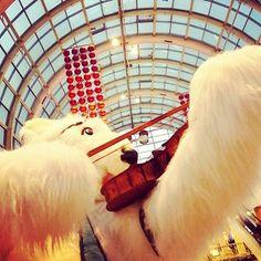 #viulisti #Jääkarhu #polarbear  #violinist #itis #joulu2014 #Yule2014