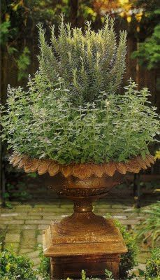 Decorative urn with rosemary and mint.
