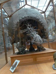 glyptodon asper from behind