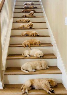 Super Cute Puppies, Baby Animals Super Cute, Cute Baby Dogs, Cute Little Puppies, Cute Dogs And Puppies, Cute Little Animals, Cute Funny Animals, Doggies, Cute Pets