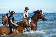 Swimming with horses, Humlebæk strand, Denmark