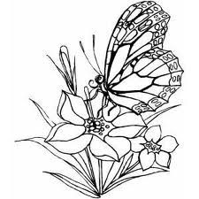 Butterfly Flower Coloring PageFLOWER