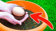 Put An Egg In Your Garden And See What Will Grow is part of Garden layout vegetable We will tell you about a ton of super simple and effective homemade fertilizers that will turn your garden into a - Small Vegetable Gardens, Vegetable Garden Planning, Vegetable Garden Design, Garden Soil, Garden Plants, Vegetable Gardening, Container Gardening Vegetables, Container Plants, Gemüseanbau In Kübeln