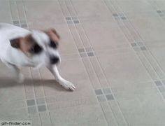 Amazing Kung-fu Dog Trick