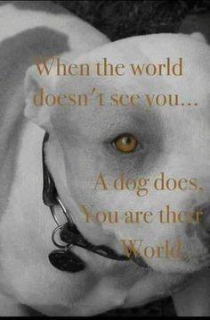 I love dogs I Love Dogs, Puppy Love, Animals And Pets, Cute Animals, Baby Animals, Funny Animals, Dog Line, Dog Rules, Pit Bull Love