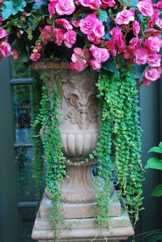 Pink and green in urn.