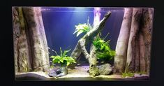 New project completed by Aquaprofessional for a custom built aquarium. Aquaprofessional partnered with to deliver… Custom Aquariums, Building, Projects, Instagram, Log Projects, Buildings, Construction, Architectural Engineering