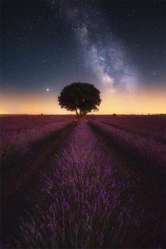 Milky way over lavender fields in Spain - Brihuega, Spain - Nature/L. Milky way over lavender fields in Spain - Brihuega, Spain - Nature/Landscape Pictures Creation Myth, Lavender Fields, Landscape Pictures, Milky Way, Landscape Photographers, Beautiful Landscapes, Beautiful Scenery, Simply Beautiful, Night Skies