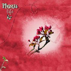 <p> Happy Scrap Arts |Maart, maand dat de lente begint, de natuur wordt wakker, de eerste bloemetjes staan in bloei. We kunnen weer lekker naar buiten om heerlijk te wandelen en mooie foto's te maken.</p>