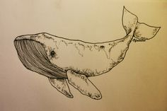 whale tattoo illustration