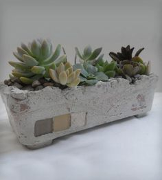 Twins Garden Standing Square Cement Planter with Succulents by Rotd Creations on Scoutmob Shoppe