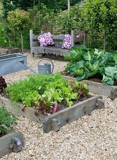 DESIGNER: CLARE MATTHEWS - ORGANIC VEGETABLE GARDEN/ POTAGER PROJECT, DEVON: VIEW OF THE POTAGER/ VEGETABLE GARDEN IN JUNE WITH WOODEN BENCH, CUSHIONS, RAISED BEDS, GRAVEL
