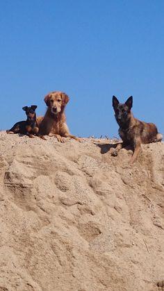 Chulo, Duque y Sasha