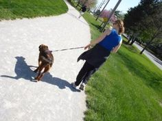 Having a dog to walk is a great motivator to be active everyday!I love my dog!
