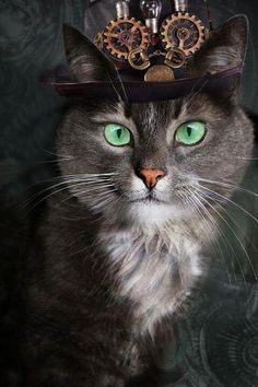 Steampunk Cats by Louise Cantwell Viktorianischer Steampunk, Steampunk Kunst, Steampunk Costume, Steampunk Fashion, Crazy Cat Lady, Crazy Cats, I Love Cats, Cool Cats, Steampunk Animals