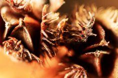 Nach einem trocknen Sommer einen Spaziergang durch den herbstlichen Wald zu machen, kann sich für alle Feinschmecker lohnen. War der Sommer warm und trocken, dann ist der Boden unter einer Buche übersät mit den Früchten des Baumes – den Bucheckern. Vollmast nennen die Förster ein Jahr mit extrem vielen Bucheckern. Carne, Garlic, Meat, Vegetables, Woodland Forest, Boden, Summer, Health, Vegetable Recipes