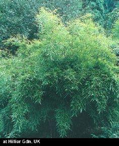 Deer Resistant Perennials F