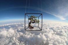 Makoto Azuma Uses the Stratosphere as a Backdrop For His Latest Floral Art space…