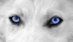 oči vlka - Hledat Googlem