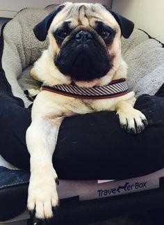 Welthundetag 2016 – Bürohund Carlo