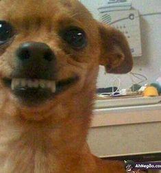 Funny Animal Jokes, Funny Dog Memes, Cartoon Memes, Cute Funny Animals, Stupid Memes, Funny Animal Pictures, Funny Cute, Funny Dogs, Cute Dogs