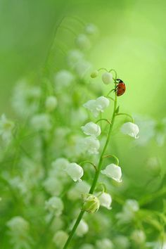 Two of my favorites: lilies of the valley (I can smell 'em now-- ahhh) and a ladybug