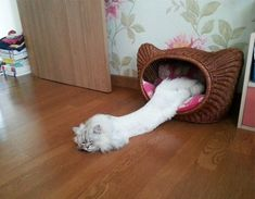 20+ Hilarious Photos Of Cats That Prove They Are Liquid