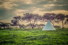 One of 12 bell tents in the sheep-grazed meadows of Hemscott Hill Farm