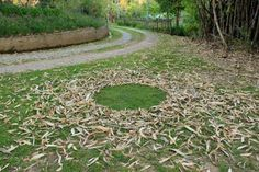 Circle made by sweeping or removing fallen leaves on a lawn, by Strijdom van der Merwe