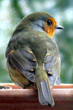 Alegre pajarito #colorfulbird #beautifulbird #bird